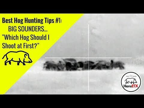 Armasight Flir Predator 336   3 Hogs Taking Dirt Naps