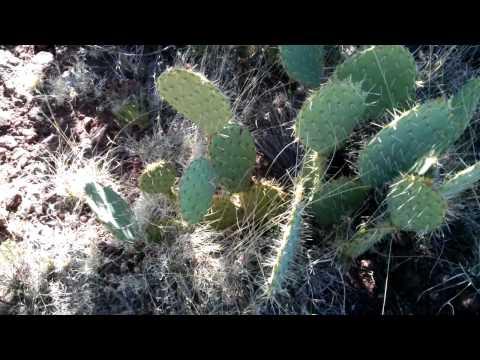 TurtleSkin Snake gaiters vs Cactus