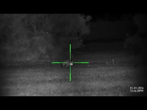 Fox 93m ATN X Sight II 5-20x