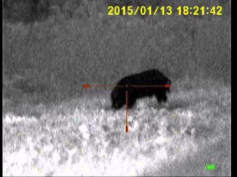 Pig Hunt with Sightmark Photon XT 4.6x42S Digital Night Vision Riflescope