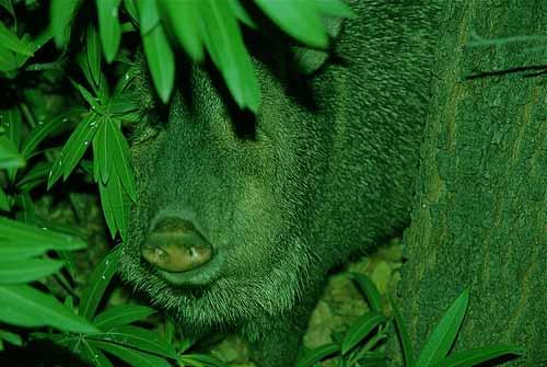 green light for hog hunting, green hog hunting light, green hog hunting lights