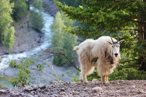 best boots for mountain goat hunting, mountain goat boots