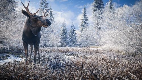 best game bags for moose, moose game bags
