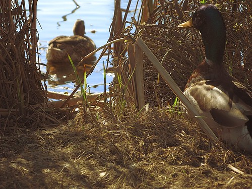 best camo pattern for duck hunting,best camo for duck hunting, what is the best camo for duck hunting, duck camo pattern, do you need camo for duck hunting, duck camouflage pattern, camo for duck hunting, how important is camo when duck hunting, duck hunting camouflage patterns